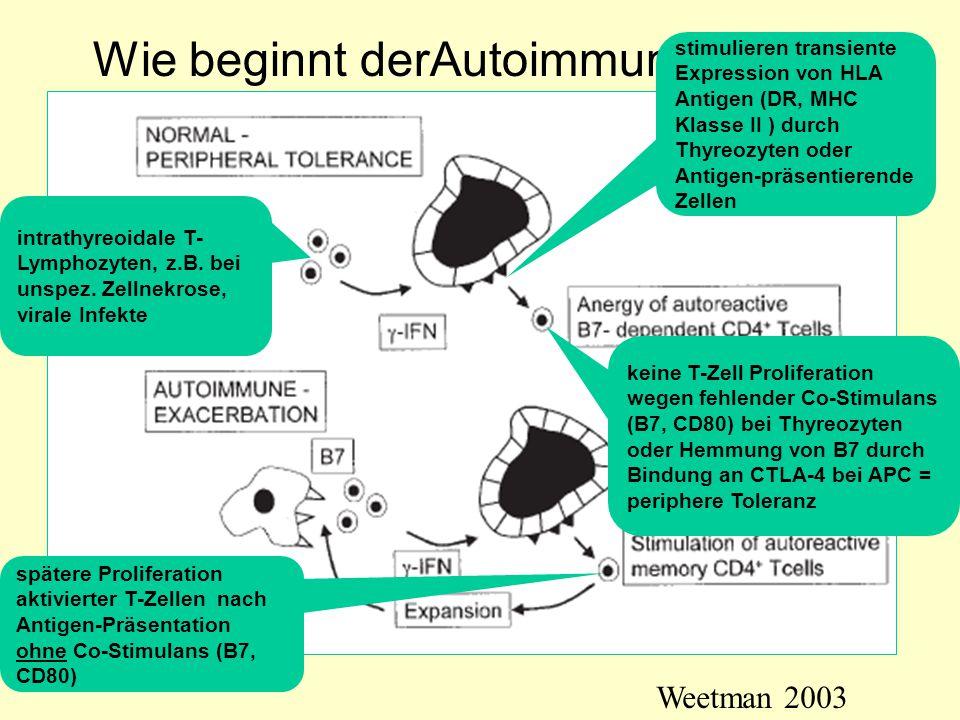 Wie beginnt derAutoimmunprozess