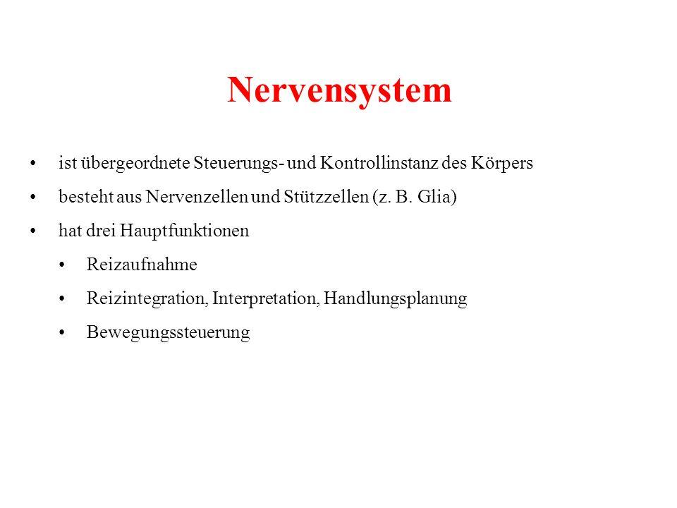 Nervensystem • ist übergeordnete Steuerungs- und Kontrollinstanz des Körpers. • besteht aus Nervenzellen und Stützzellen (z. B. Glia)