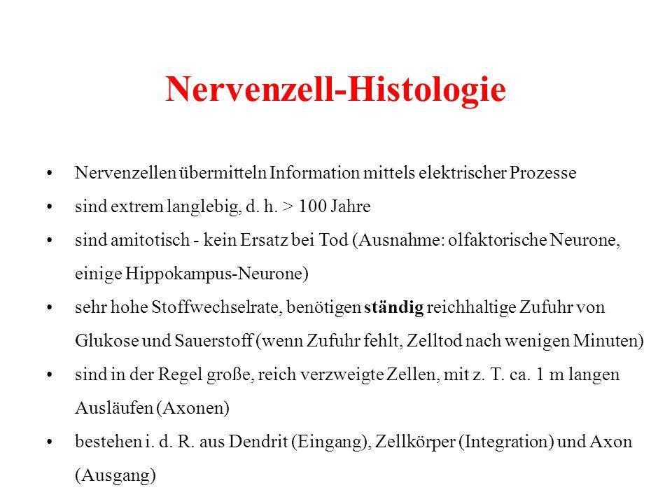 Nervenzell-Histologie