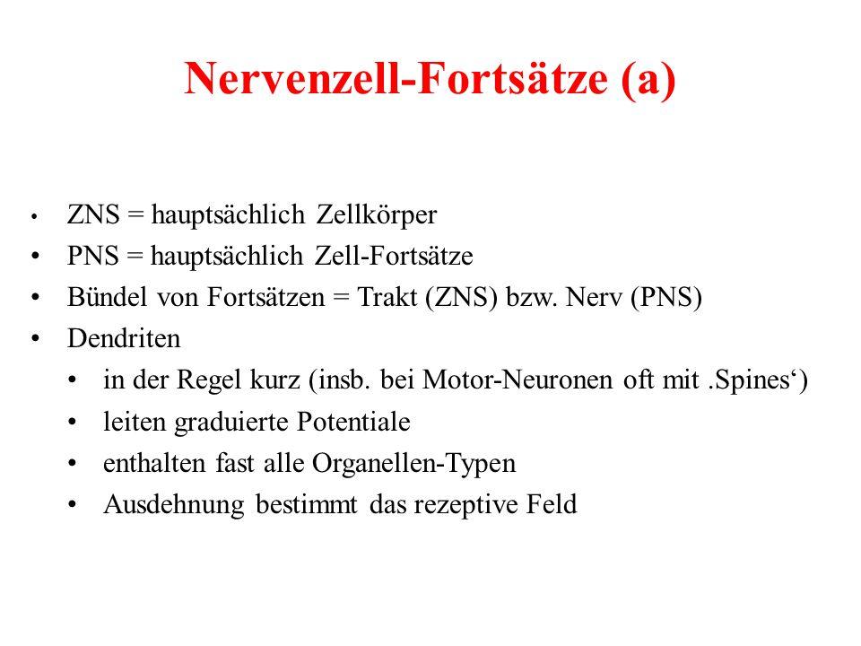 Nervenzell-Fortsätze (a)