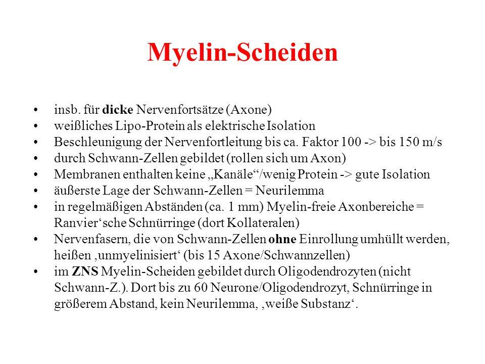 Myelin-Scheiden • insb. für dicke Nervenfortsätze (Axone)