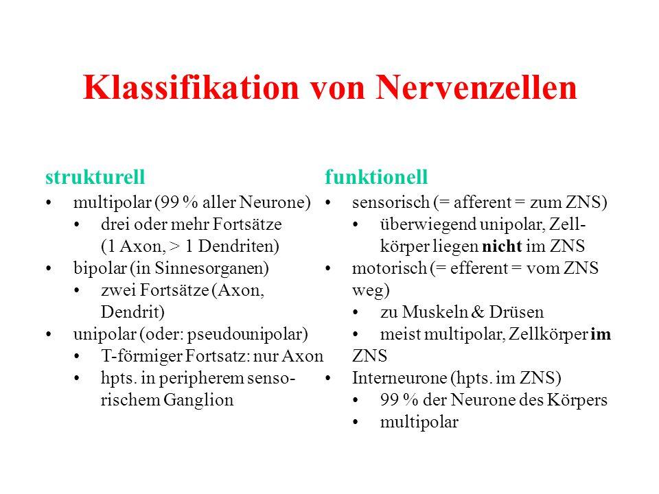Klassifikation von Nervenzellen