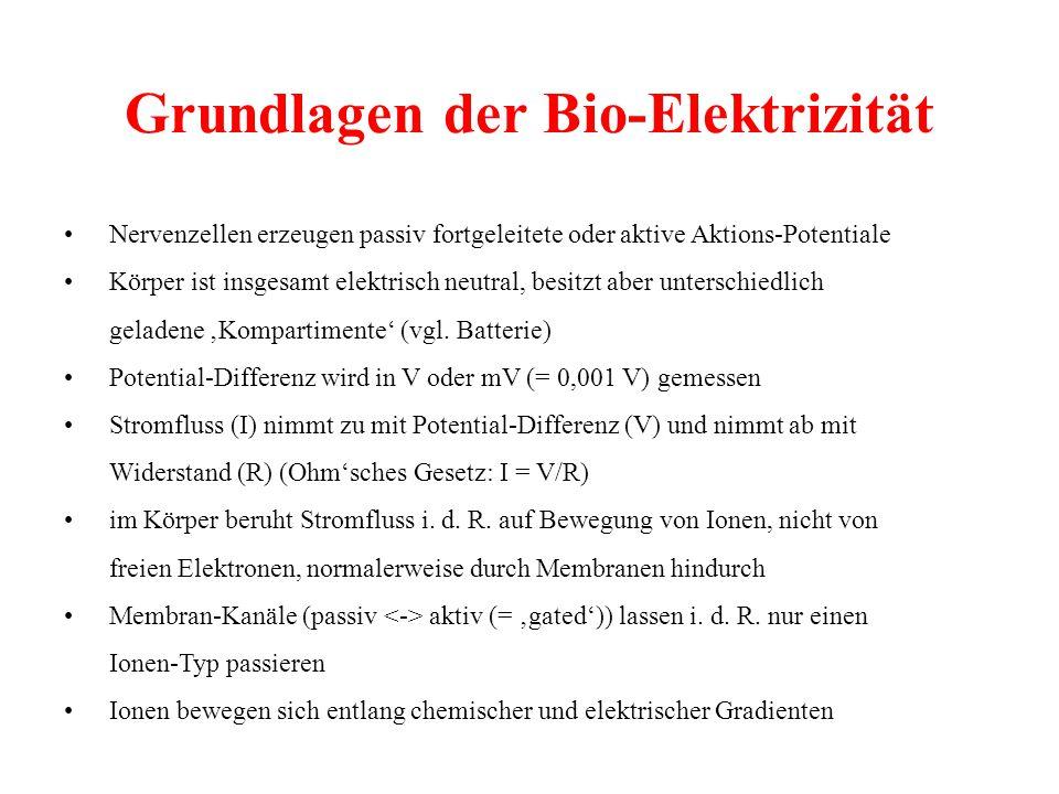 Grundlagen der Bio-Elektrizität