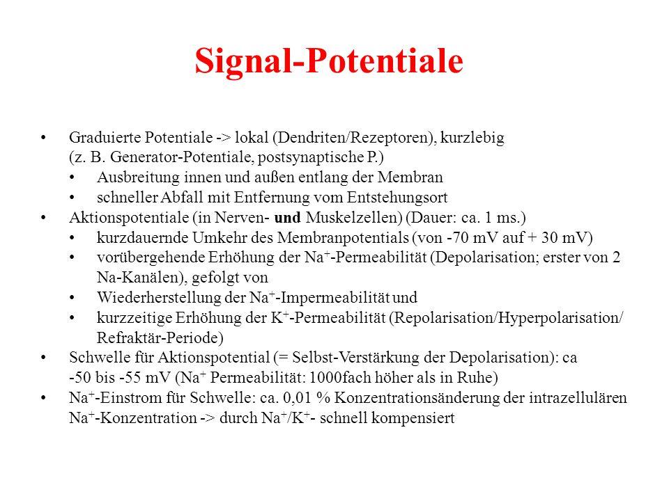 Signal-Potentiale • Graduierte Potentiale -> lokal (Dendriten/Rezeptoren), kurzlebig. (z. B. Generator-Potentiale, postsynaptische P.)