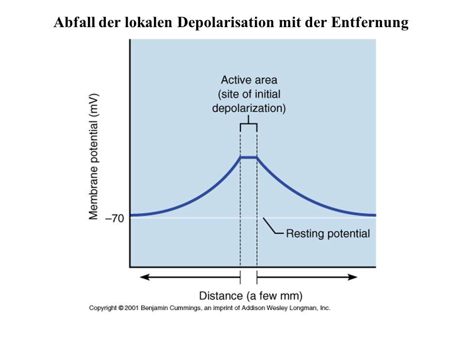 Abfall der lokalen Depolarisation mit der Entfernung