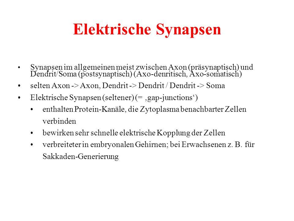 Elektrische Synapsen
