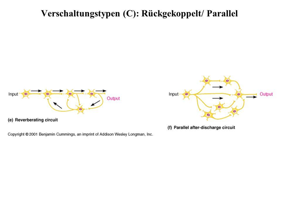 Verschaltungstypen (C): Rückgekoppelt/ Parallel