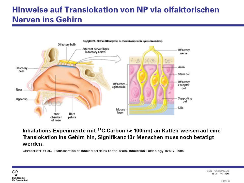 Hinweise auf Translokation von NP via olfaktorischen Nerven ins Gehirn