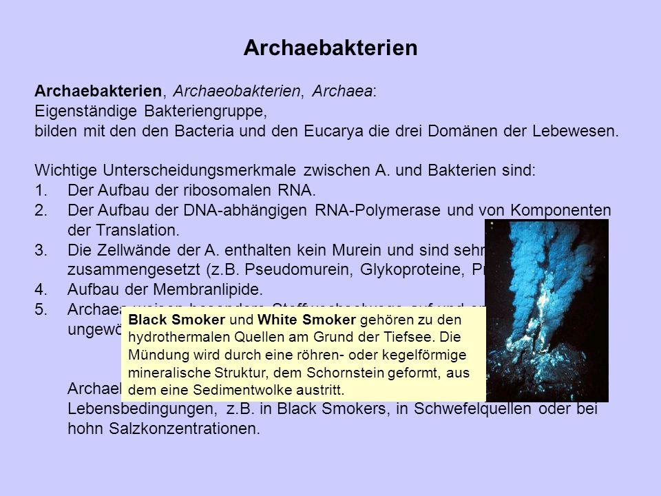 Archaebakterien Archaebakterien, Archaeobakterien, Archaea:
