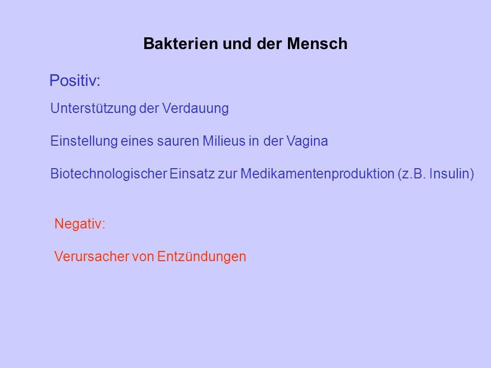 Bakterien und der Mensch
