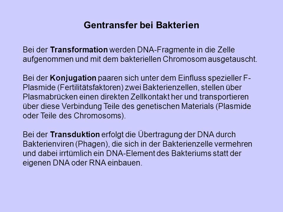 Gentransfer bei Bakterien