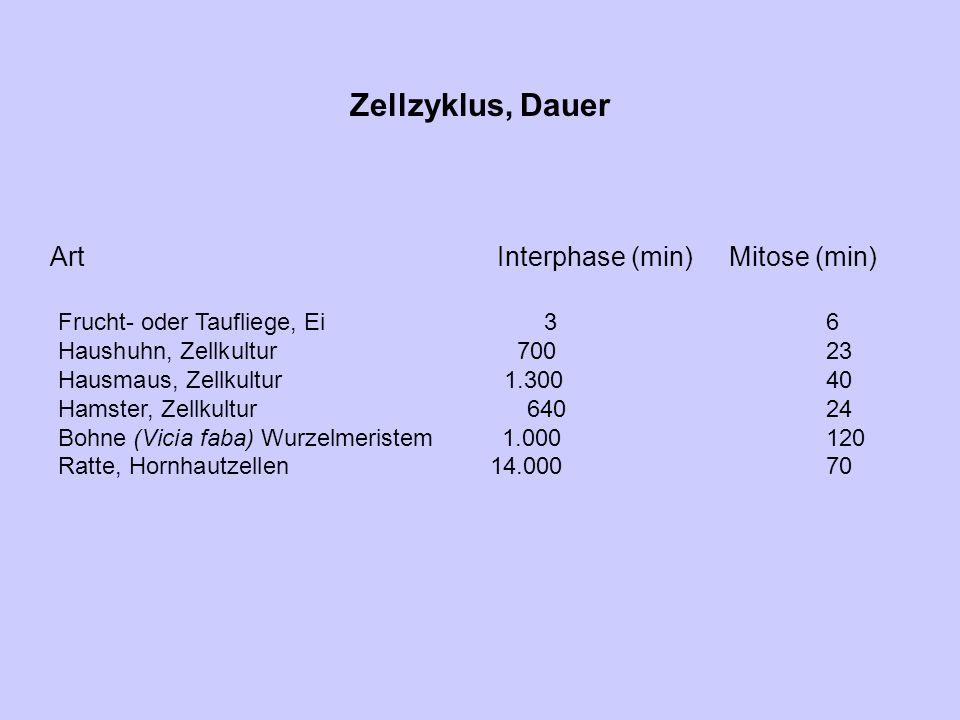 Zellzyklus, Dauer Art Interphase (min) Mitose (min)