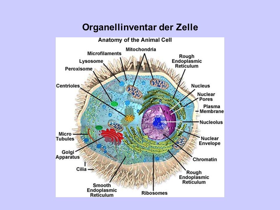 Organellinventar der Zelle