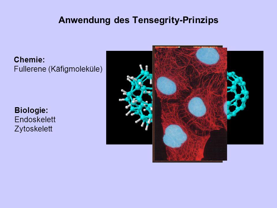 Anwendung des Tensegrity-Prinzips