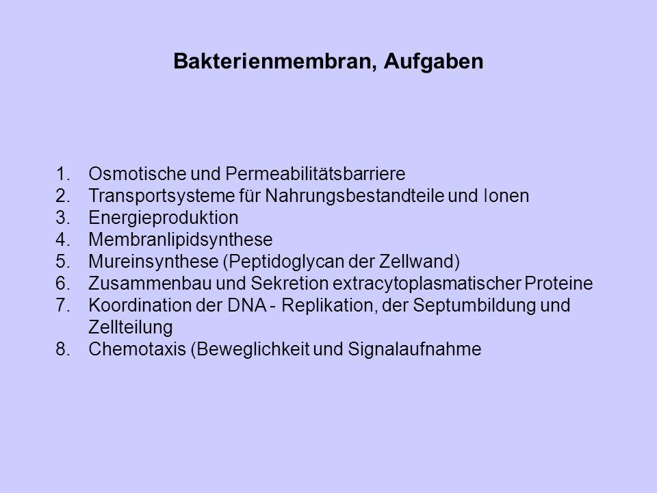 Bakterienmembran, Aufgaben