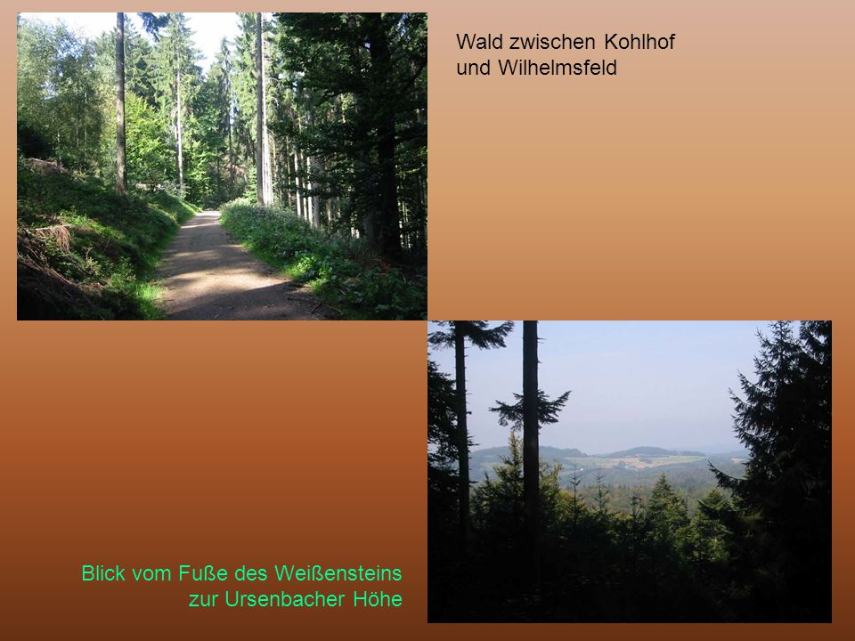 Wald zwischen Kohlhof und Wilhelmsfeld