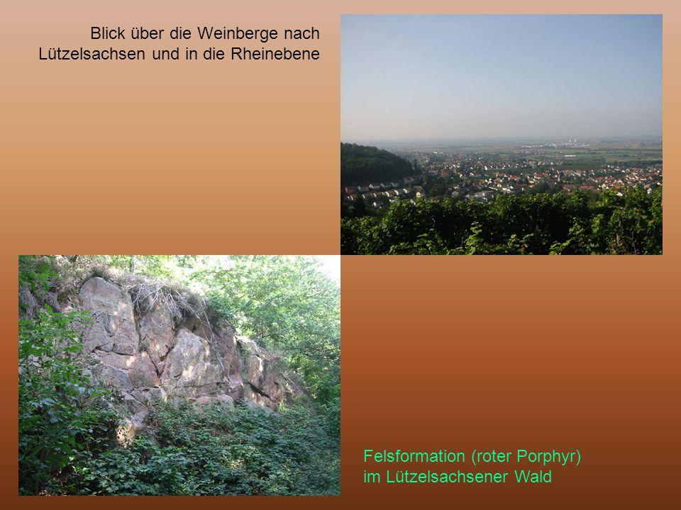 Blick über die Weinberge nach Lützelsachsen und in die Rheinebene