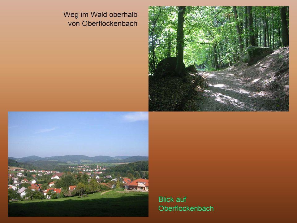 Weg im Wald oberhalb von Oberflockenbach