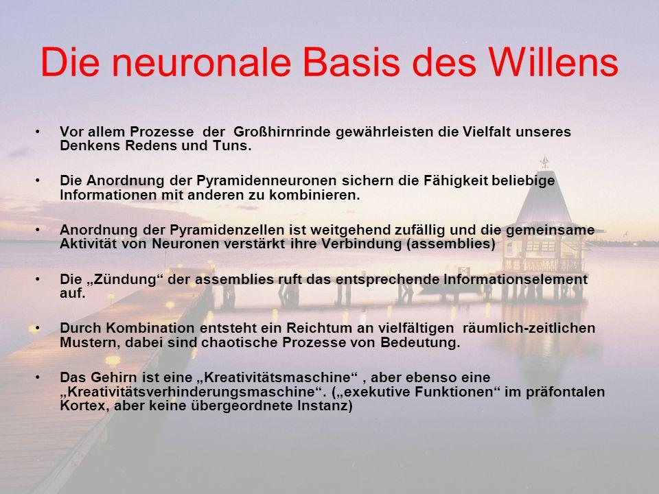 Die neuronale Basis des Willens