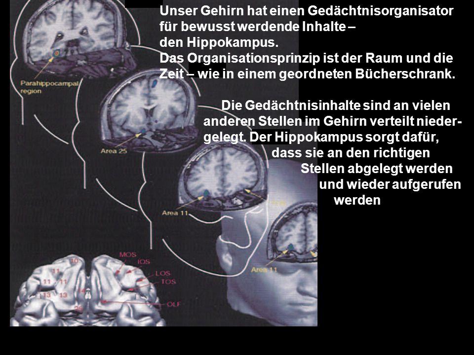 Unser Gehirn hat einen Gedächtnisorganisator