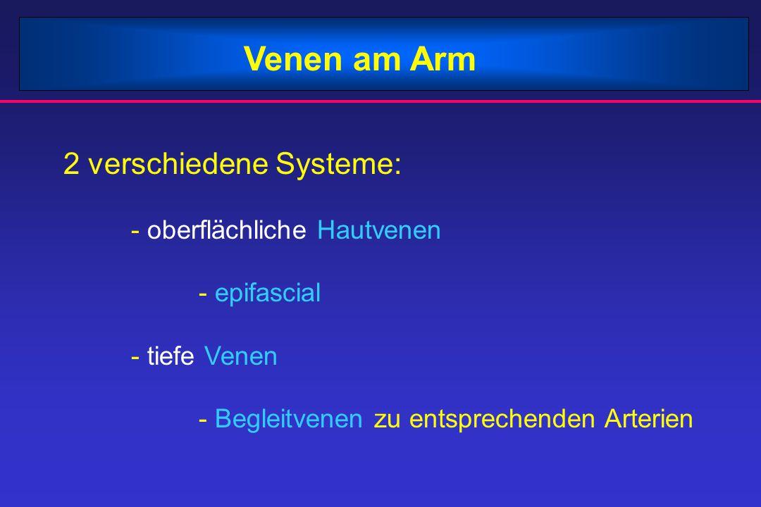 Venen am Arm 2 verschiedene Systeme: - oberflächliche Hautvenen