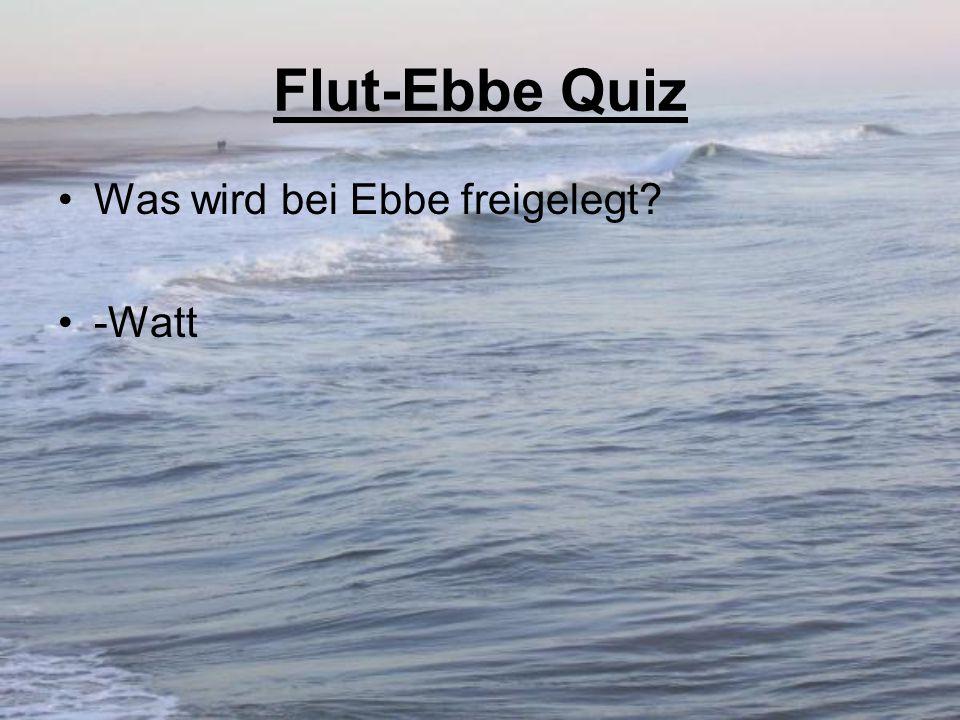 Flut-Ebbe Quiz Was wird bei Ebbe freigelegt -Watt