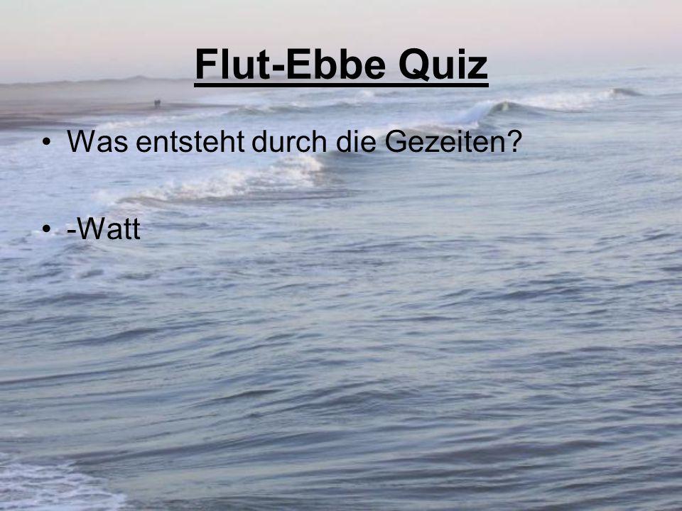 Flut-Ebbe Quiz Was entsteht durch die Gezeiten -Watt
