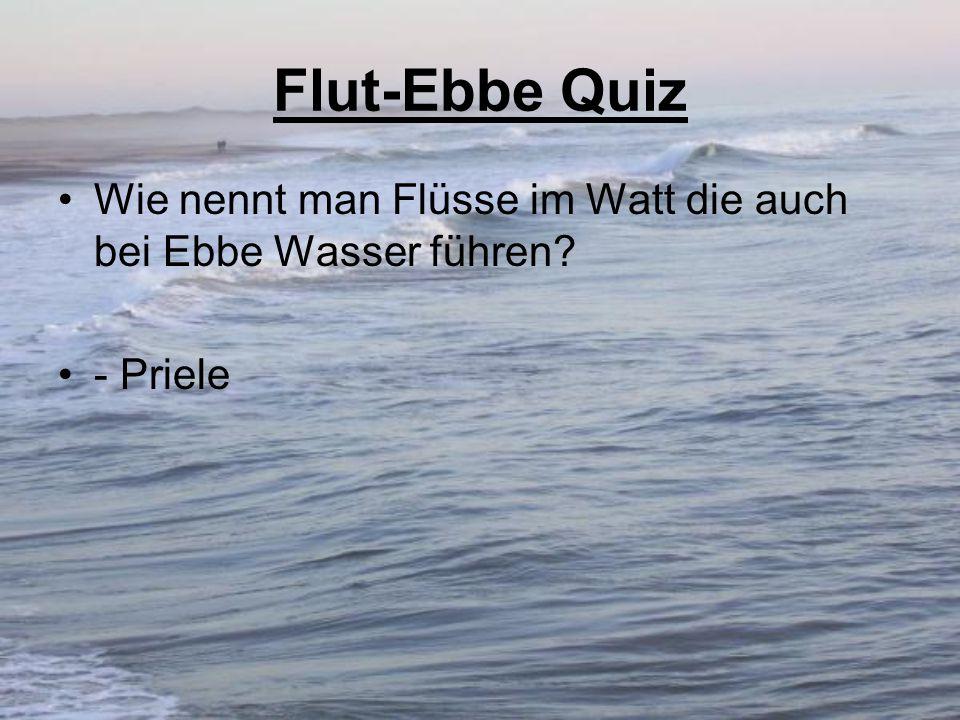 Flut-Ebbe Quiz Wie nennt man Flüsse im Watt die auch bei Ebbe Wasser führen - Priele