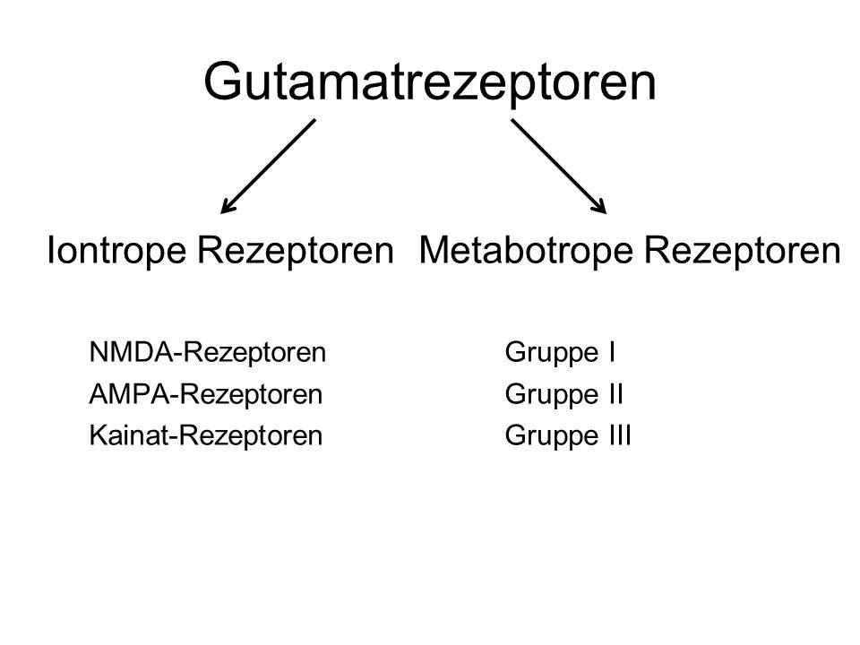 Gutamatrezeptoren Iontrope Rezeptoren Metabotrope Rezeptoren