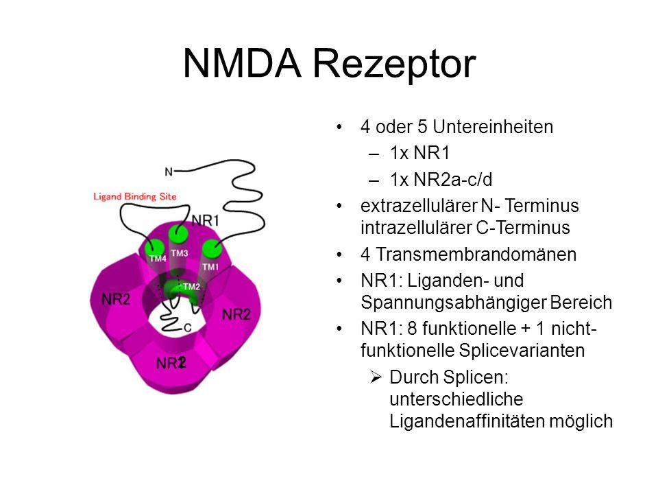 NMDA Rezeptor 4 oder 5 Untereinheiten 1x NR1 1x NR2a-c/d