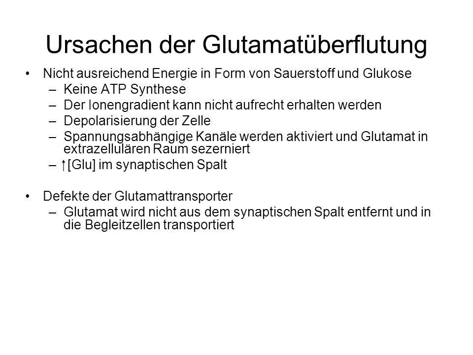 Ursachen der Glutamatüberflutung