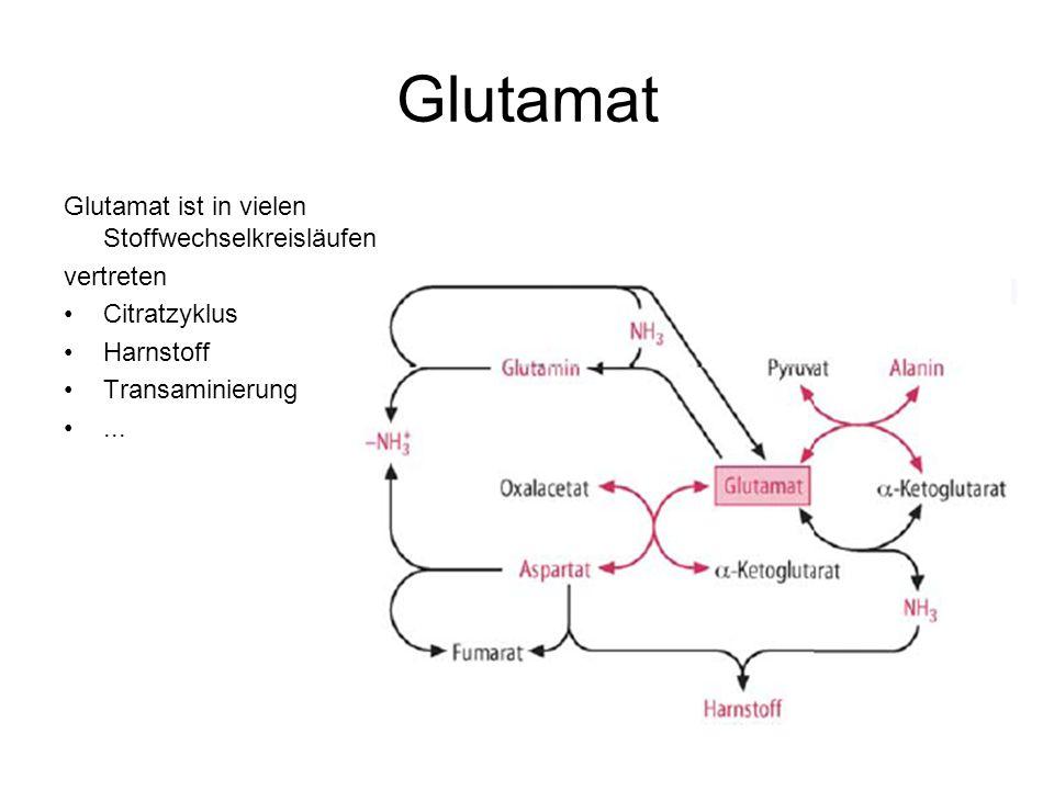 Glutamat Glutamat ist in vielen Stoffwechselkreisläufen vertreten