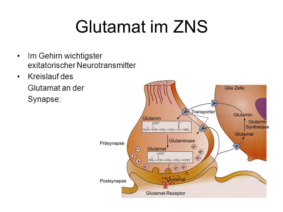 Glutamat im ZNS Im Gehirn wichtigster exitatorischer Neurotransmitter