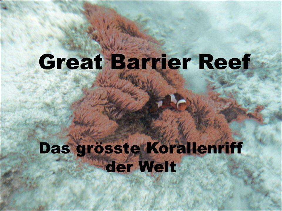 Das grösste Korallenriff der Welt