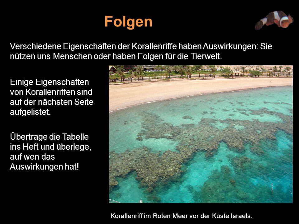 Folgen Verschiedene Eigenschaften der Korallenriffe haben Auswirkungen: Sie nützen uns Menschen oder haben Folgen für die Tierwelt.