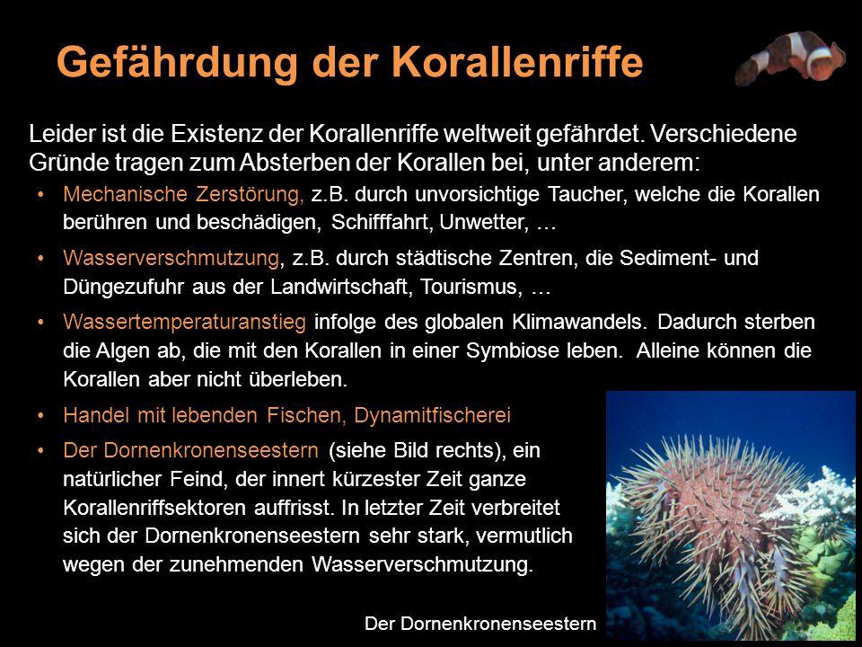 Gefährdung der Korallenriffe