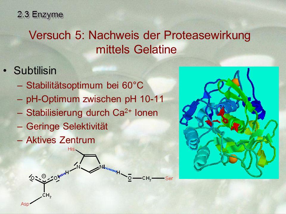 Versuch 5: Nachweis der Proteasewirkung mittels Gelatine