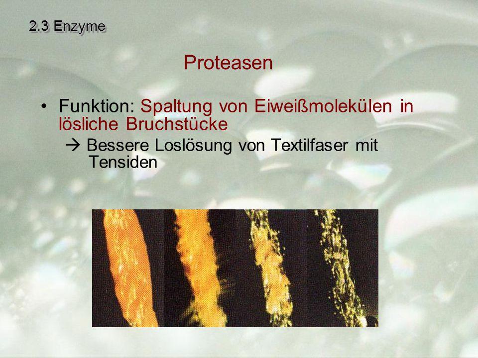 2.3 Enzyme Proteasen. Funktion: Spaltung von Eiweißmolekülen in lösliche Bruchstücke.