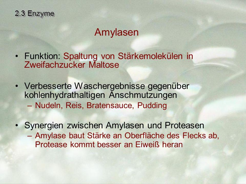 2.3 Enzyme Amylasen. Funktion: Spaltung von Stärkemolekülen in Zweifachzucker Maltose.