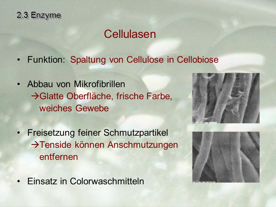 Cellulasen Funktion: Spaltung von Cellulose in Cellobiose