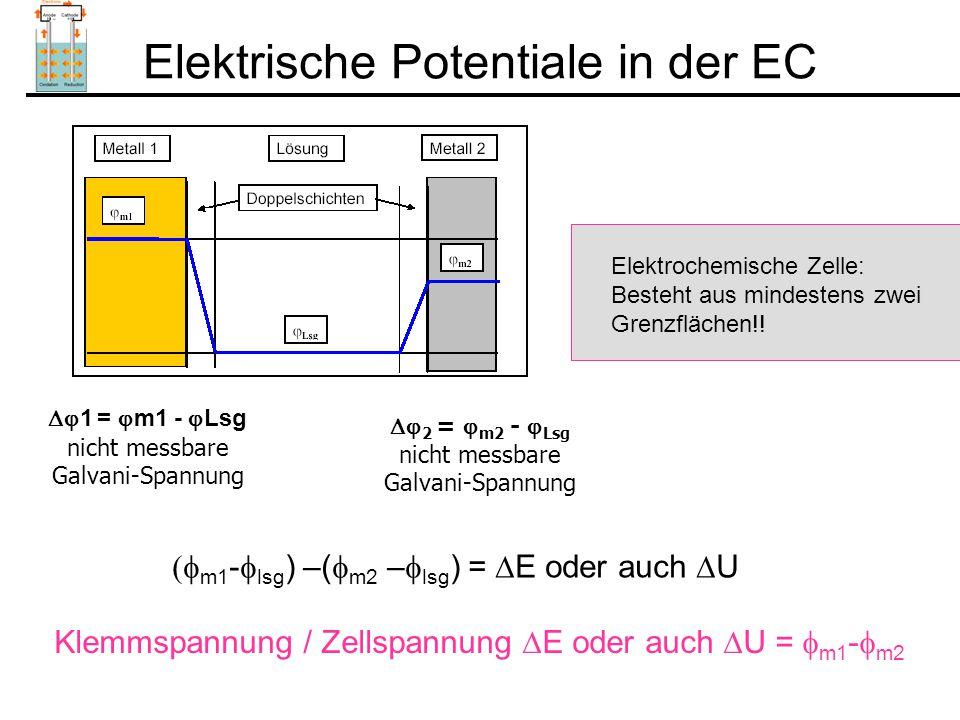 Elektrische Potentiale in der EC