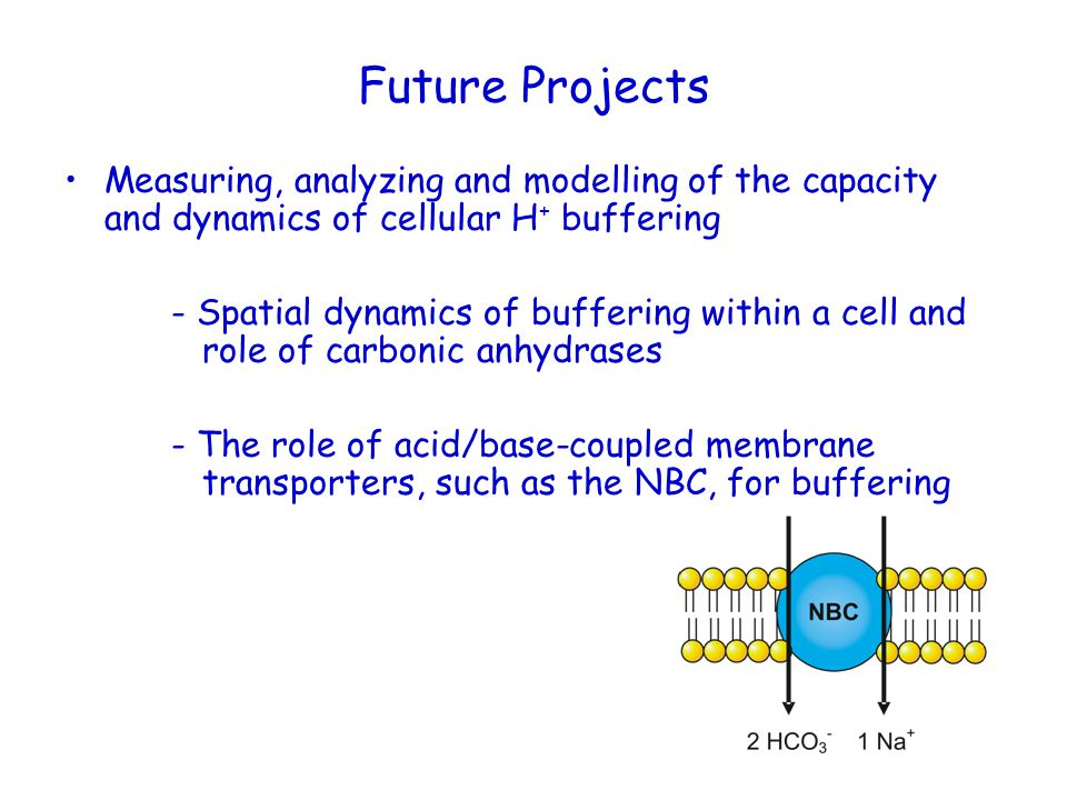 Future Projects Measuring, analyzing and modelling of the capacity and dynamics of cellular H+ buffering.