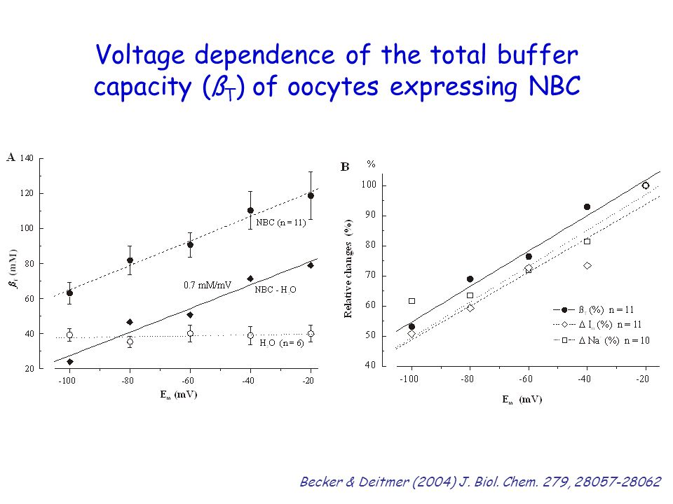 Voltage dependence of the total buffer capacity (ßT) of oocytes expressing NBC