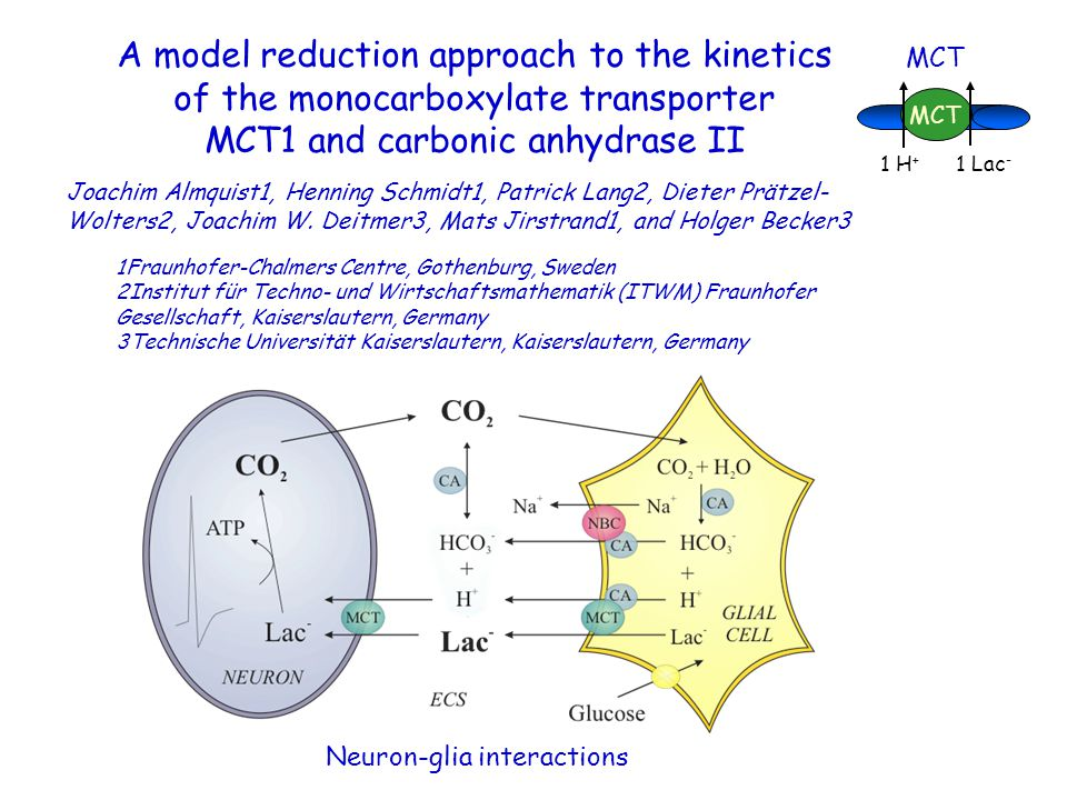 A model reduction approach to the kinetics of the monocarboxylate transporter MCT1 and carbonic anhydrase II