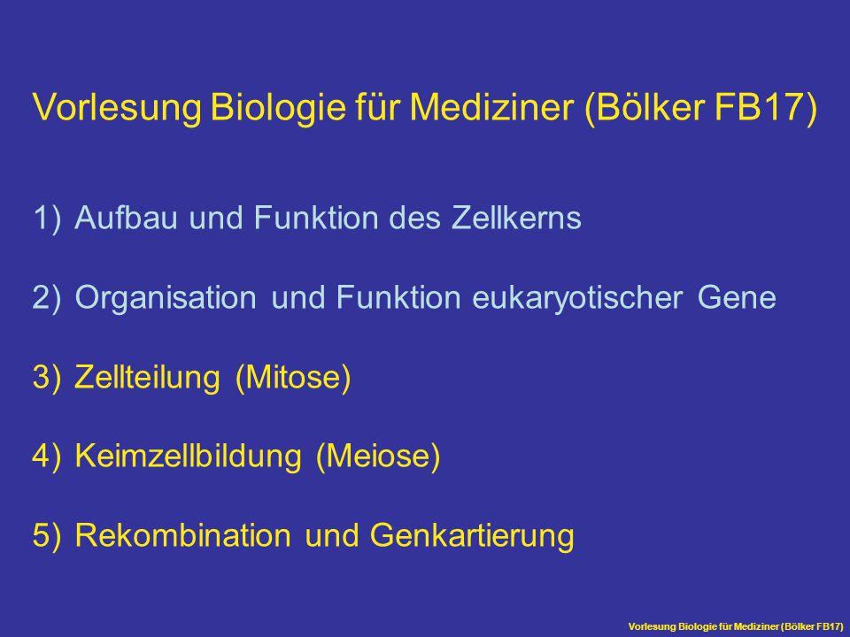 Vorlesung Biologie für Mediziner (Bölker FB17)