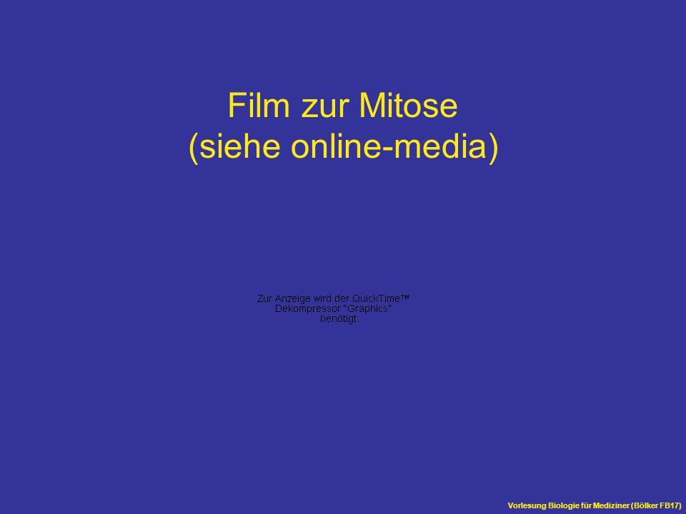 Film zur Mitose (siehe online-media)