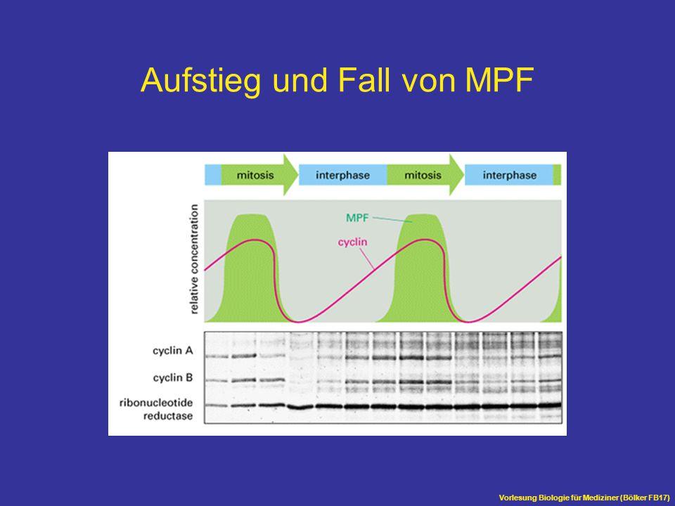 Aufstieg und Fall von MPF