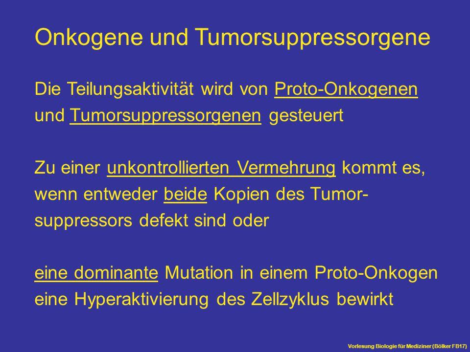 Onkogene und Tumorsuppressorgene