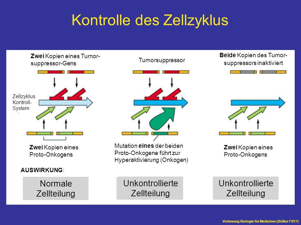 Kontrolle des Zellzyklus