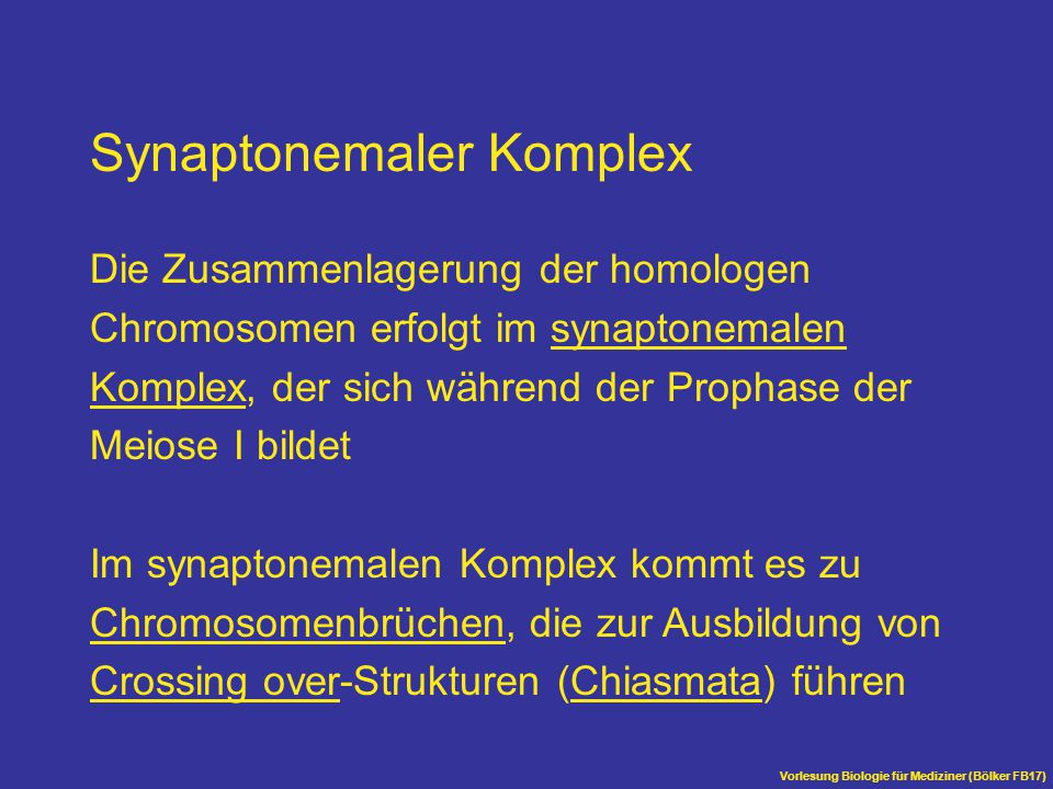 Synaptonemaler Komplex